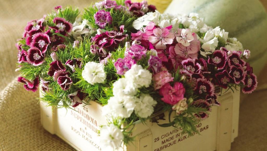Hộp hoa cẩm chướng đẹp tặng mẹ chồng ngày 20/10