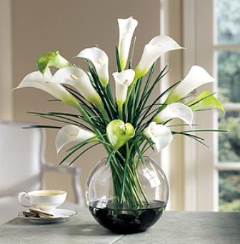 Hướng dẫn cắm hoa Loa kèn ấn tượng(Hoa rum)