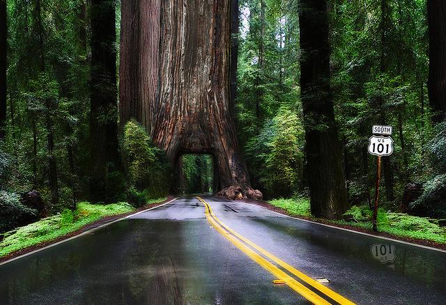Vẻ đẹp lung linh của những loài cây đẹp nhất thế giới