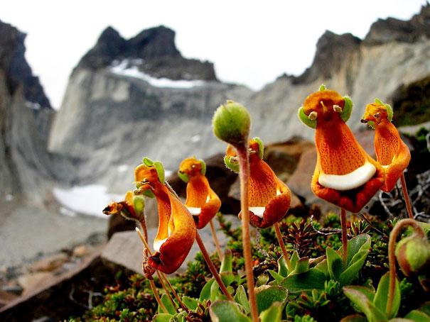 Bông hoa độc mà lạ với những hình thù thú vị