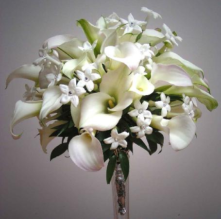 Hoa Loa Ken S�u hại hoa loa k�n thường �t