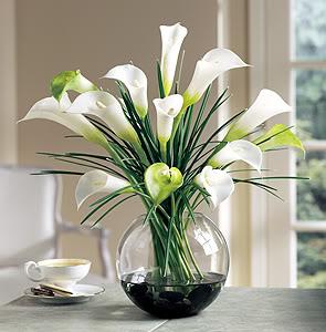 ý nghĩa của hoa loa kèn