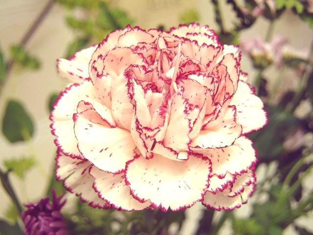 Bí quyết tặng hoa cho mẹ thật ý nghĩa