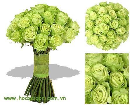 Kết quả hình ảnh cho hoa hồng màu xanh lá