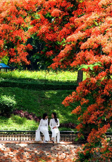 Bildergebnis für mùa hoa phượng đỏ
