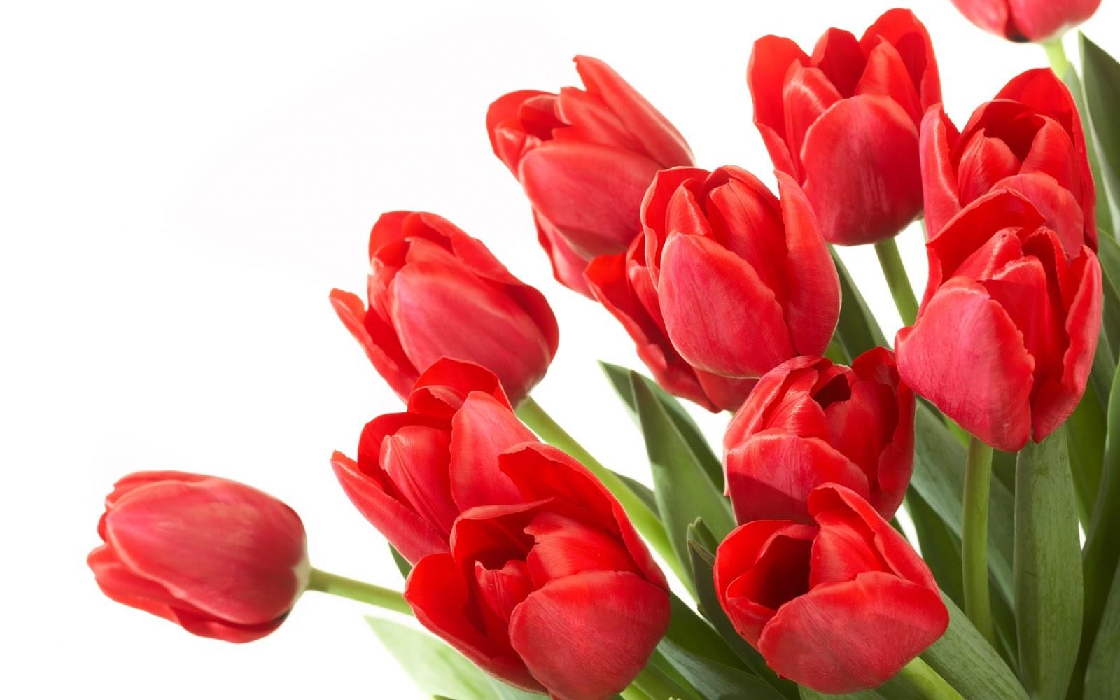 Hoa tulip tặng vợ mang ý nghĩa về tình yêu hoàn hảo