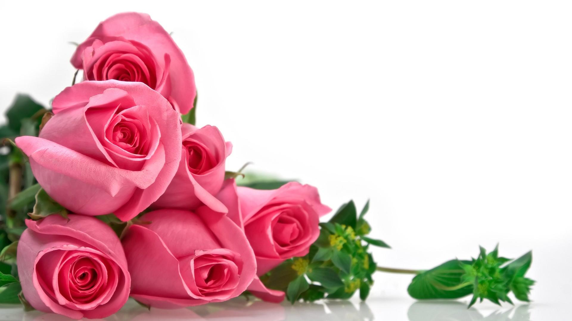 Hoa hồng là món quà tình yêu mãnh liệt nồng cháy