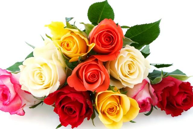 Hoa hồng tặng mẹ với ý nghĩa thể hiện cho tình yêu chung thủy, chân thành và vĩ đại của mẹ dành cho gia đình