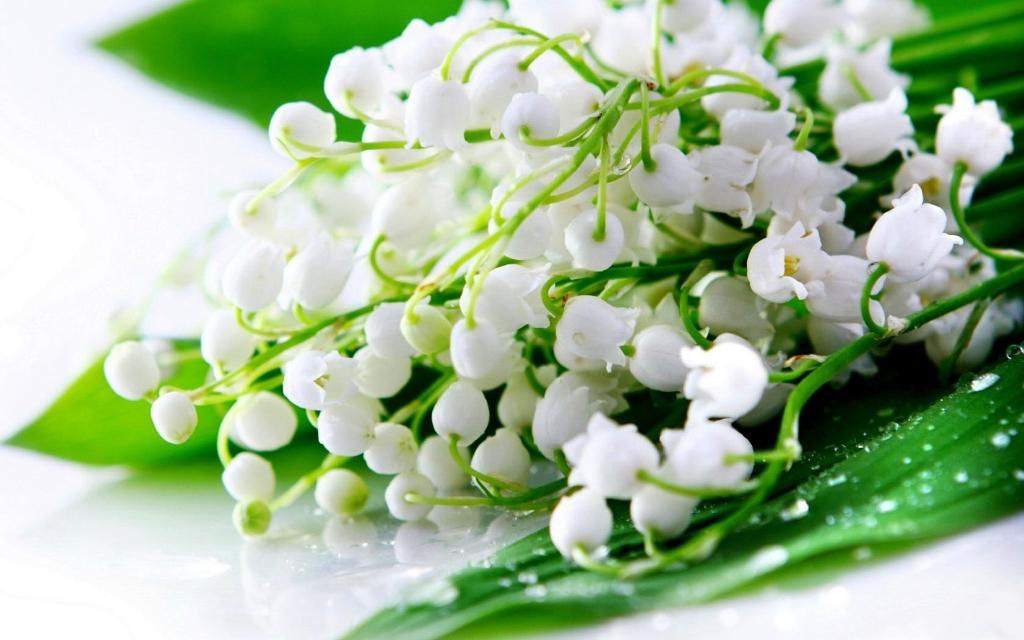 Bó hoa lan chuông dành tặng mẹ thể hiện lòng biết ơn sâu nặng