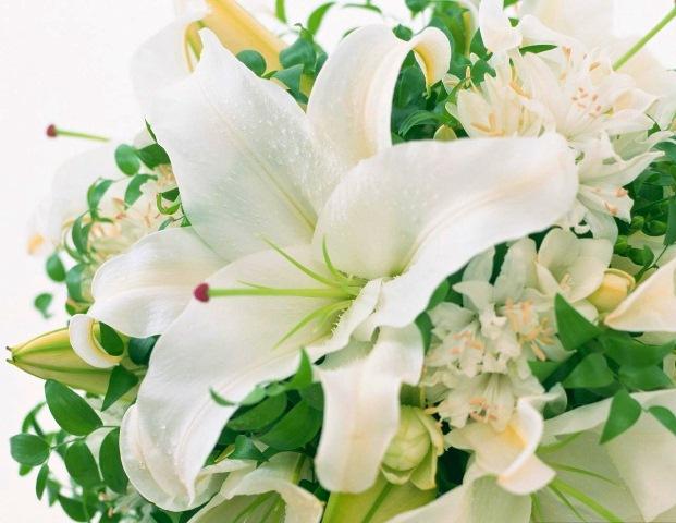 Ngoài hoa hồng thì hoa ly cũng chính là loài hoa được dành tặng rất nhiều vào dịp lễ 20 tháng 1