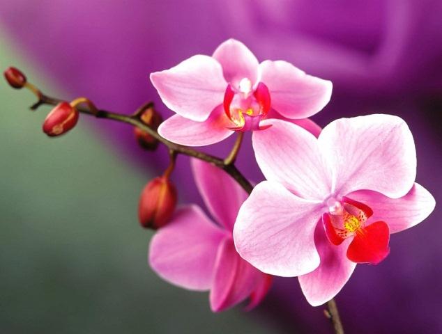 Tặng hoa tươi 20 tháng 10 không thể nào không nhắc đến những đóa hoa lan xinh đẹp
