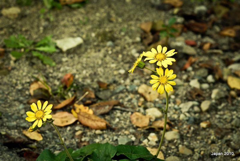 Kết quả hình ảnh cho hoa dại