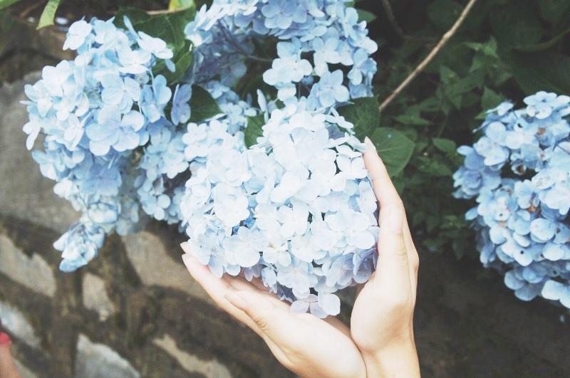 Mỗi màu hoa lại biểu thị cho một ý nghĩa khác nhau