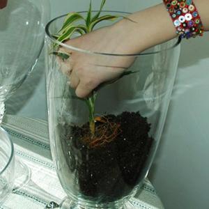 Hướng dẫn trồng cây trong Lọ thuỷ tinh