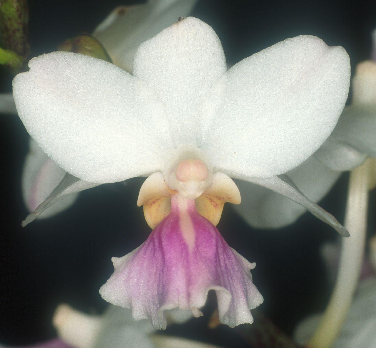 bộ sưu tập phong lan Vanda