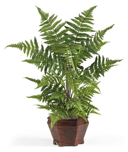 Một số loại cây làm sạch không khí trong nhà (p1)