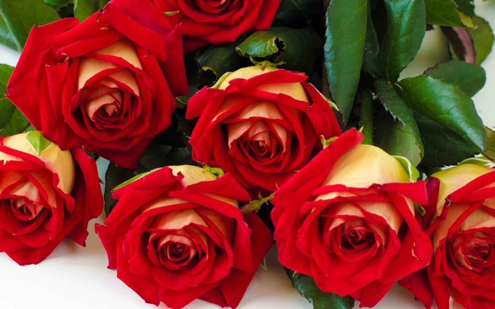 Hoa hồng đỏ thể hiện tình yêu nồng cháy dành tặng cho vợ hoặc bạn gái