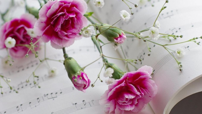 Những bông hoa cẩm chướng không chỉ đẹp mà còn có ý nghĩa sâu sắc còn
