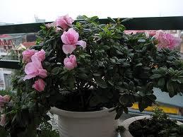 Trồng hoa ở ban công giúp hóa giải phong thủy - trong hoa o ban cong17