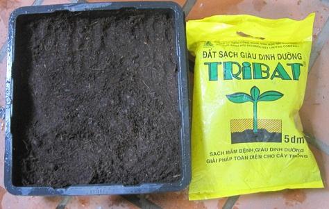 Hướng dẫn trồng sen trong chậu bằng hạt
